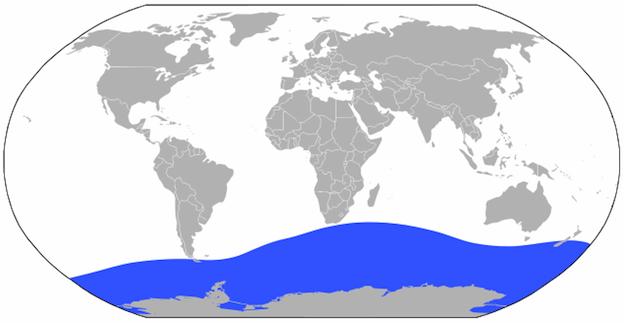 Información sobre el calamar colosal.